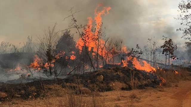 Paulding County Fire & Rescue and the Georgia Forestry Commission (GFC) are currently battling a wildfire encompassing as many as 20 acres.  Source: Paulding County Fire and Rescue