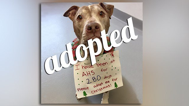 Horry County Humane Society Myrtle Beach Sc