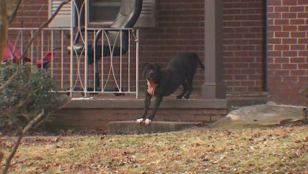 Atlanta Police said dogs who reportedly mauled three children in a neighborhood this morning. (SOURCE: WGCL)