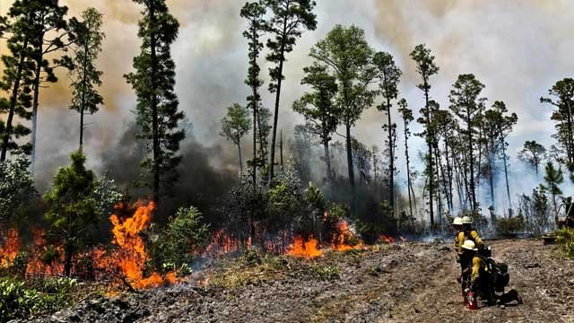 Fire forces evacuations near Ga.'s Okefenokee Swamp in US