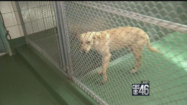 Life and death could come down to dollars, cents at animal shelter