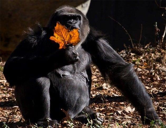 (Source: The Zoo Atlanta)