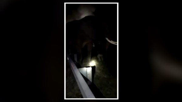 Three African elephants pulled from tractor trailer fire on highway