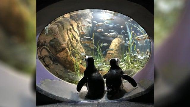 Source: Georgia Aquarium