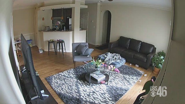 RAW VIDEO: Woman hired to watch dog caught urinating in dog owner's kitchen pot