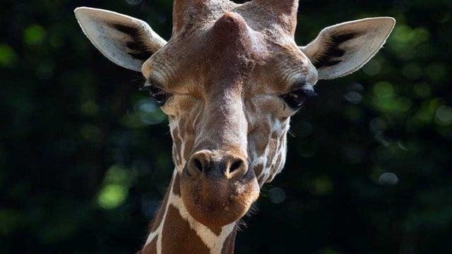 (Source: Zoo Atlanta)