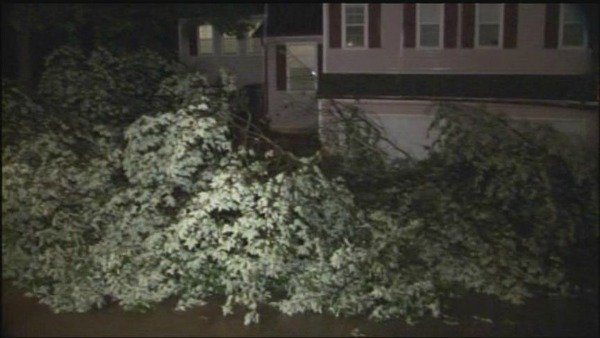 Tree fell on Kennesaw Springs Drive