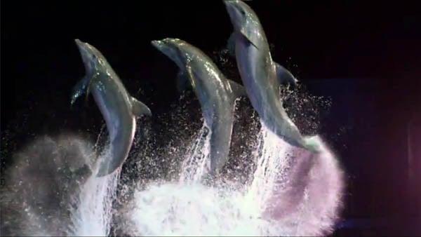 Ga Aquarium Welcomes 1 Million Visitors To Dolphins