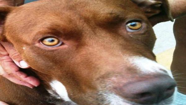 Braveheart the dog