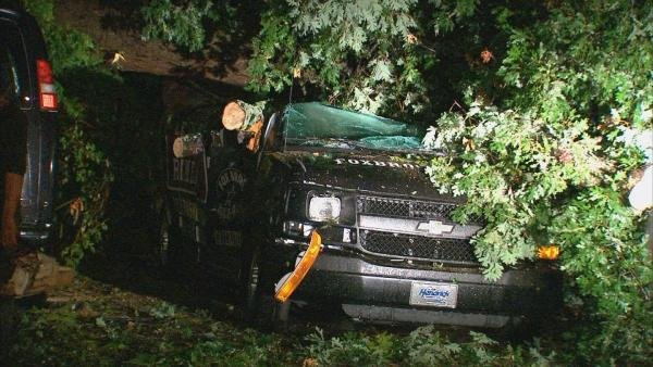 Tree falls on catering van