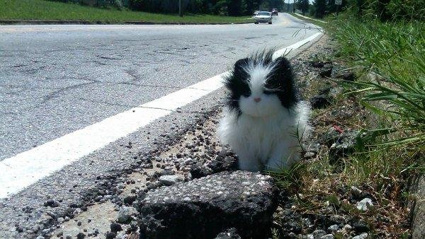 Pothole Kitty!