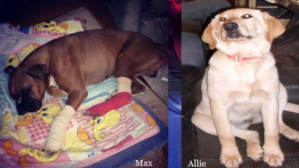 Photos of Max & Allie