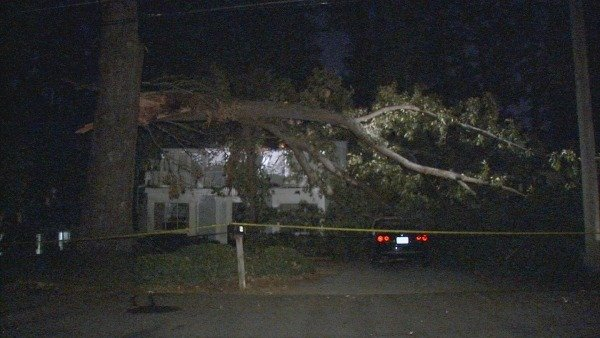 Mark Melvin/CBS Atlanta- This large tree fell in a Buckhead neighborhood early Thursday.