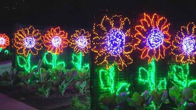 garden lights holiday nights lights up the atlanta botanical garden - Atlanta Botanical Garden Lights