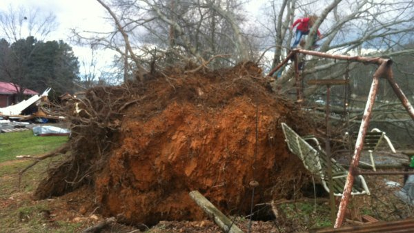 Tree uprooted in Gordon County