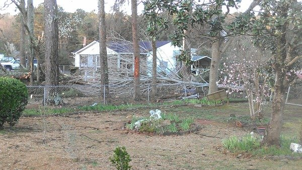 Vel Watkins' home surrounded by fallen trees