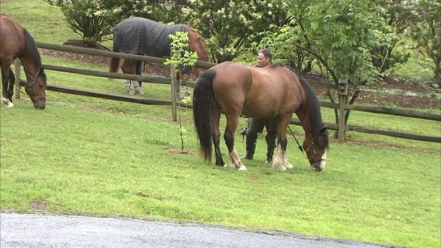 A rescuer prepares to move horses to higher location due to rising storm waters