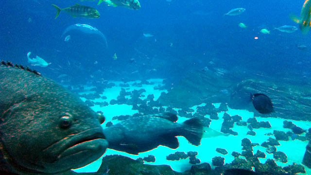 Georgia Aquarium Prepares For World Oceans Day Cbs46 News