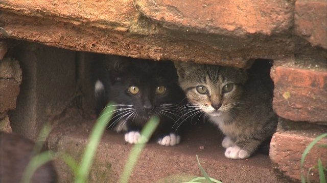 Groups want to rescue stray cats cower at abandoned apartments