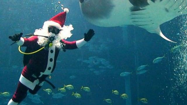 Underwater Santa Entertains At Georgia Aquarium Wtoc Tv