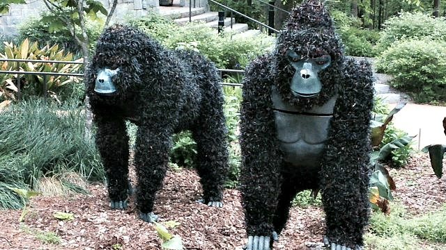 Gorillas join Imaginary Worlds exhibit at Atlanta Botanical Garden