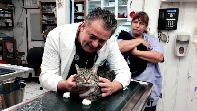 Dr. Good examines a cat at his Marietta veterinary clinic