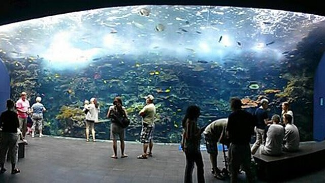 World Oceans Day Comes To Atlanta Fox 8 Wvue New Orleans