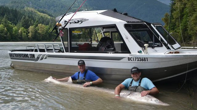 Ron Jarvis (L) and his 19-year-old son Paul Jarvis pose with the 11 foot 10 inch sturgeon that Paul caught on June 12, 2014. Ron and Paul were visiting British Columbia from Atlanta. It was their first time fishing together. (Courtesy: Peak Communicators)