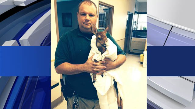 Deputy Chris Barger and the fawn he helped rescue. (Courtesy: Forsyth County Sheriff's Office)
