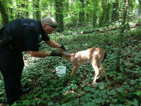 Deer Roswell Police Department