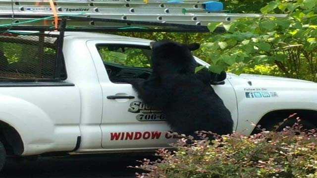 Bear Sneaks Food And Soda From Work Truck In North Georgia Arizona S Family